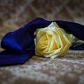 fotografie_de_nunta_012a